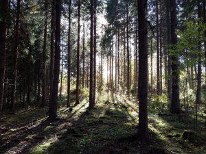 Fantastisk höst i Järvsö