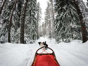 Vi drar iväg ut i vinterlandskapet